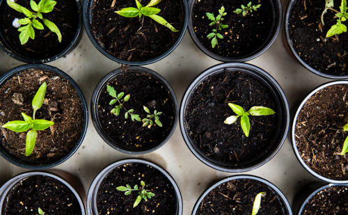 Urban agriculture: an option in full development