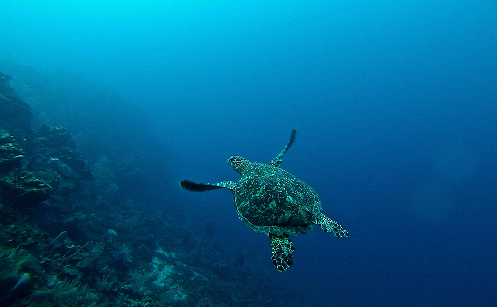 The European Union and the marine environment: room for improvement