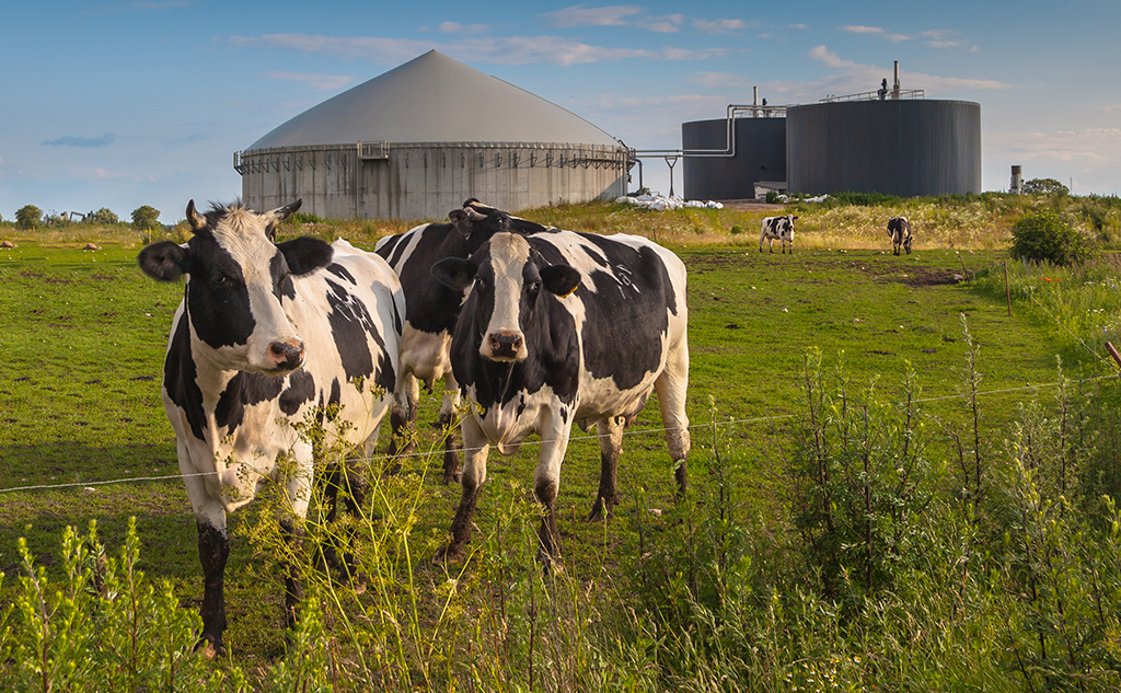 Digester: all about the process