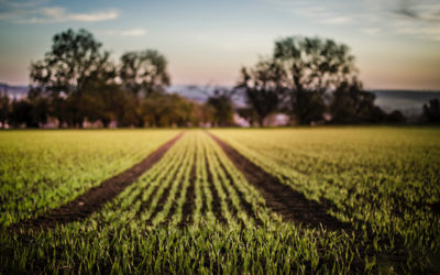 Agriculture and environment – green shoots of harmony?