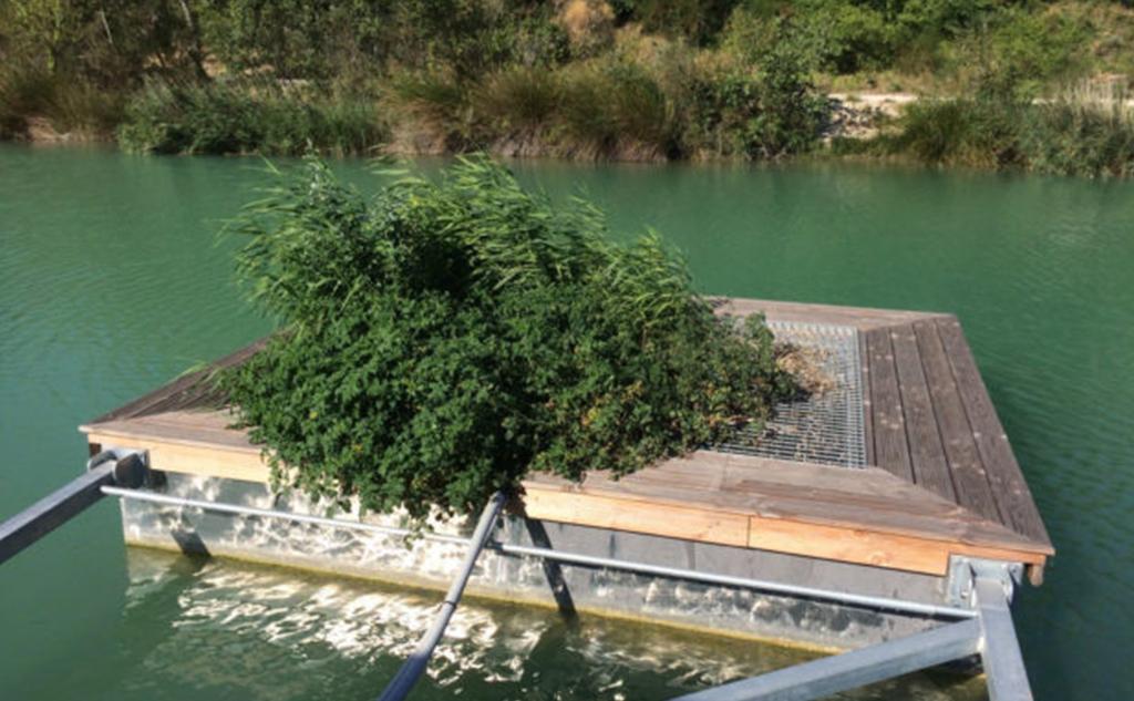 Jardin d'assainissement phyto-purification system