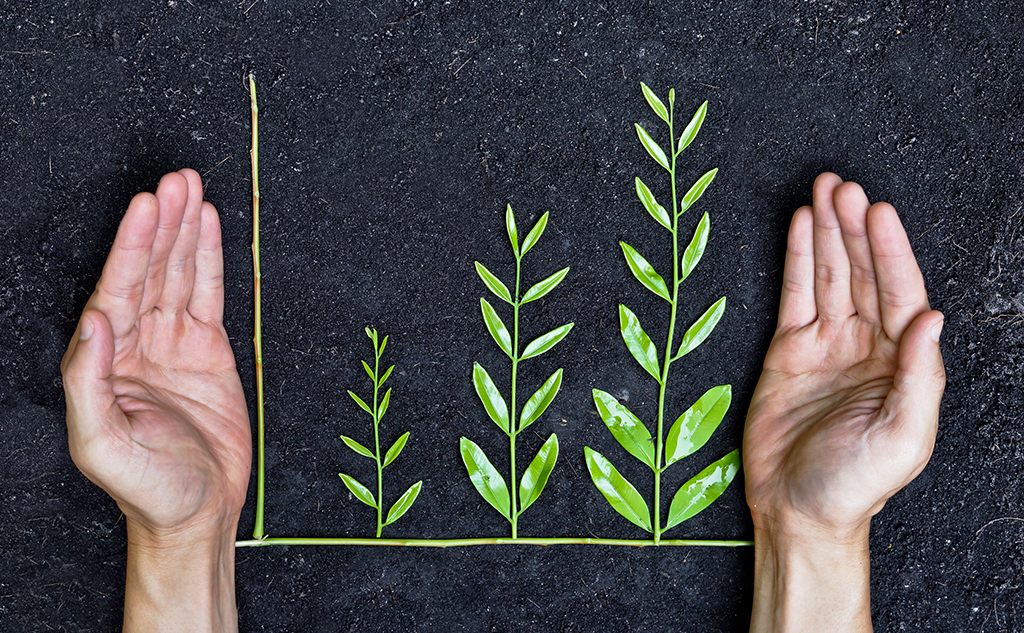 Green taxonomy: What exactly are we talking about?