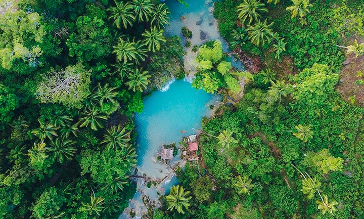 biodiversité-paysage-tropical