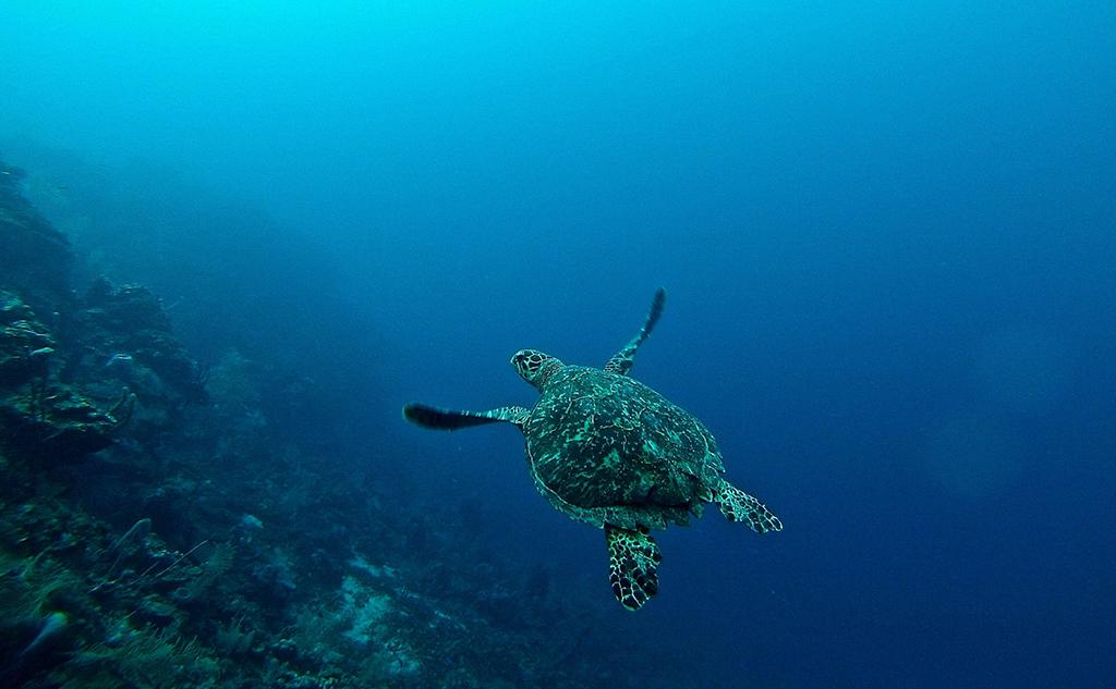 L'Union européenne et le milieu marin: peut mieux faire