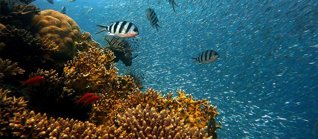 Recif de corail