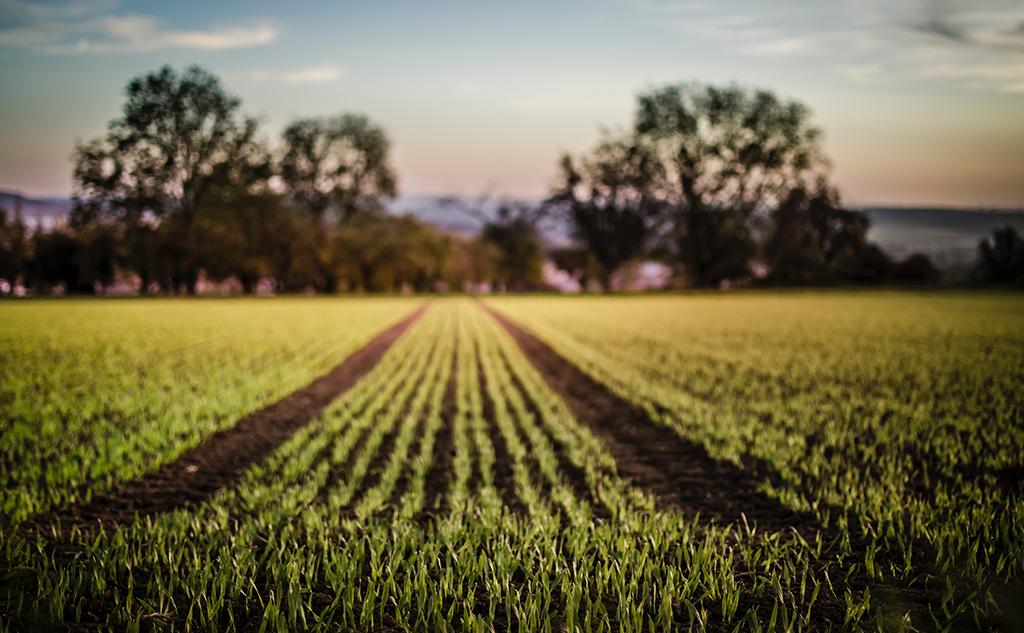 Agriculture et environnement : les voies d'une (ré)conciliation