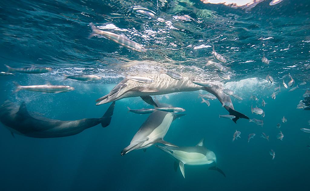 Bruit sous-marin : une autre pollution cachée
