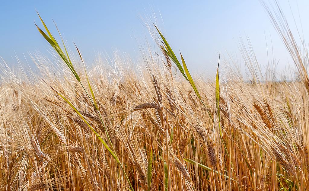 Un nouvel élan pour les produits biosourcés